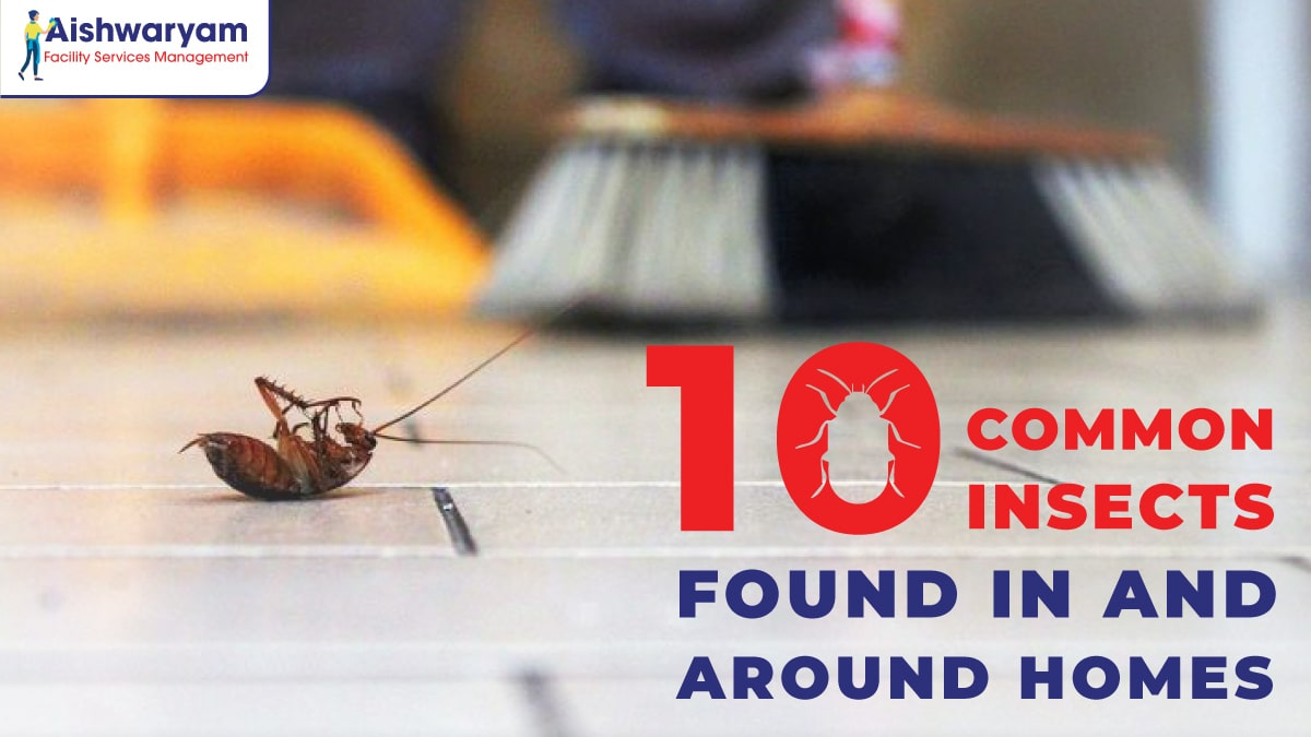 common-home-insects-afsm